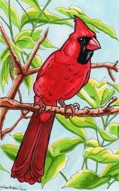 Illustration: Cardinal
