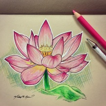 Lotus - color pencils on toned paper