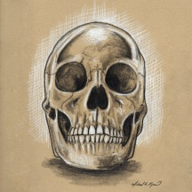Skull - graphite and white charcoal on toned paper