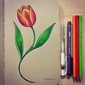 Tulip - color pencils on toned paper