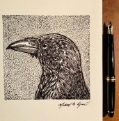 Crow - pen & ink
