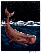 Illustration: Sperm Whale