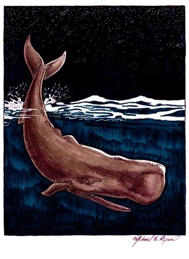 Illustration: Sperm Whale