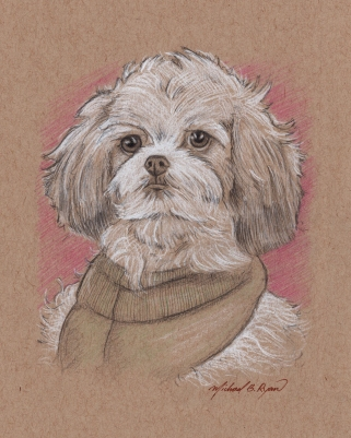 Portrait Drawing: Shih Poo